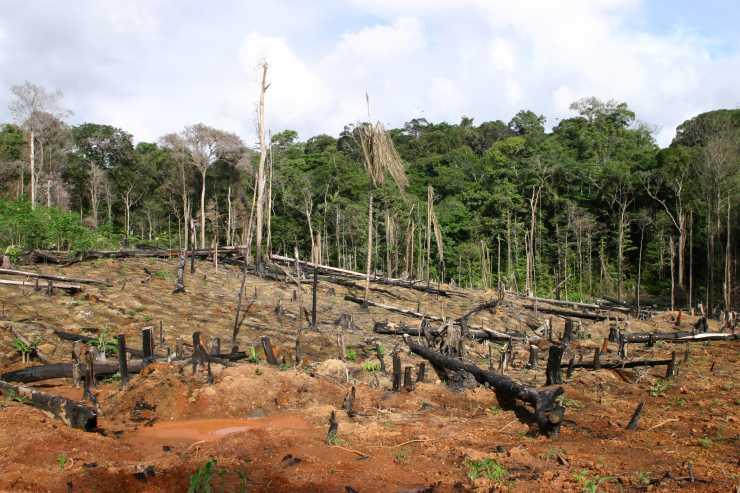 Februar 2011 klimaschutz von unten for Boden im regenwald